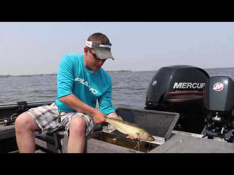 How To Release Injured Walleyes
