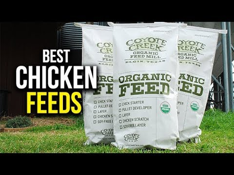 Top 5 Best Chicken Feed for Laying Hens