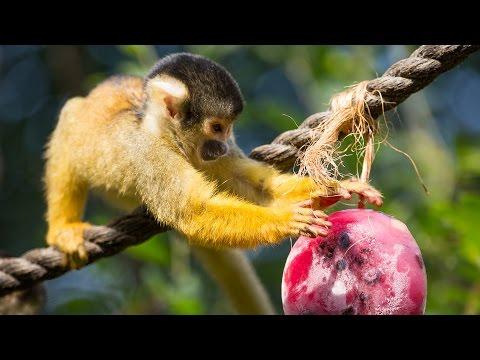 Animals enjoy hot weather treats at ZSL London Zoo