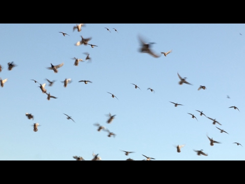 2012 Nevada Duck Hunting - Full Episode Season 4 e8