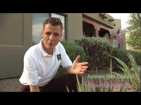 Phoenix Arizona Pest Control - Bulwark Exterminating