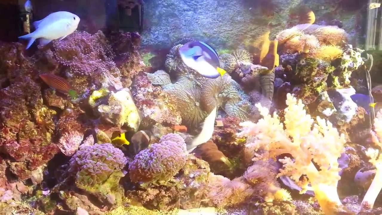 Aquarium en eau de mer 200 litres avec lampe led razor 160 watts aquarium en eau de mer 200 litres avec lampe led razor 160 watts parisarafo Images