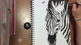 Zebra Speed Draw