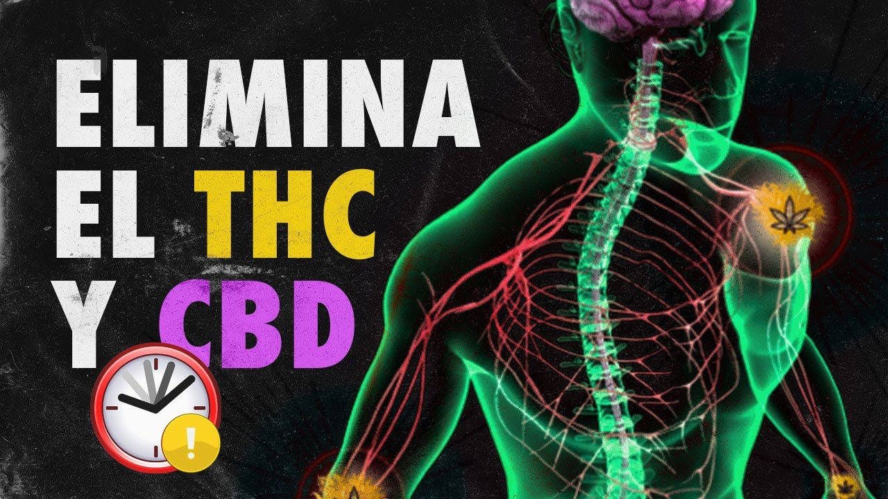 Cuánto tiempo permanece el THC en nuestro organismo