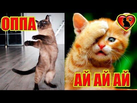 Что Кошка хочет Вам сказать! Как понять свою кошку!