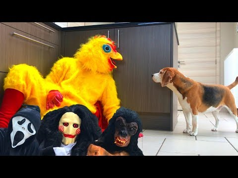 Funny Dogs Get Pranked Compilation 1 : Cute Dogs Louie and Marie