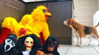 Funny Dogs Get Pranked Compilation : Cute Dogs Louie and Marie thumbnail