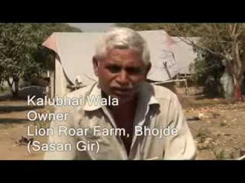 Interview of Kalubhai - Lion Roar Farm, Sasan Gir