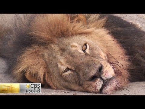 Advocates Say Ethical Hunts Can Help Save Endangered Species