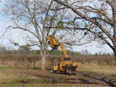 Pecan Tree Shaker Youtube