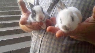 ДЕКОРАТИВНЫЕ КРОЛИКИ. Карликовые кролики