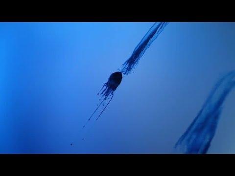 Klaus Schulze - P.T.O.