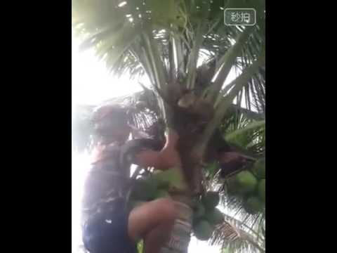 The coconut tree 😂😂😂