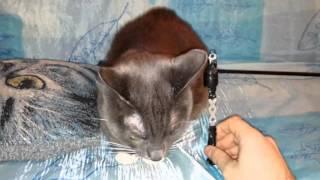 Рыболовные грузила для фидера своими руками. Обзор вместе с котом.