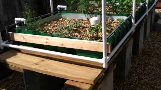 Mikes Aquaponics - First System Update Part 3 - Building A Pvc Pipe Trellis