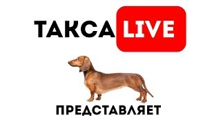 🔴 Прямой эфир.Реальная жизнь собак породы такса