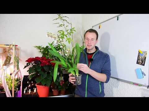Tipps für den Pflanzen-Einkauf - Worauf muss ich beim Kauf von Pflanzen achten?