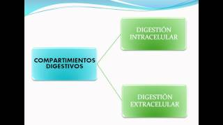 Principales etapas en el procesamiento de los alimentos(ingestión,digestión,absorción y eliminación)