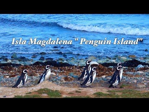 "Chile EP. 8- Visiting Punta Arenas and Exploring Isla Magdalena ""Penguin Island"" Tour"