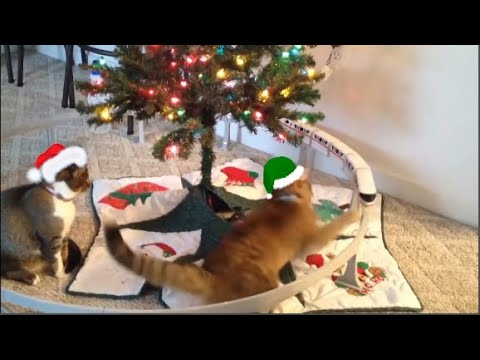 Funniest videos kittens vs cats knocking over Christmas tree 2019 | Funny cat video