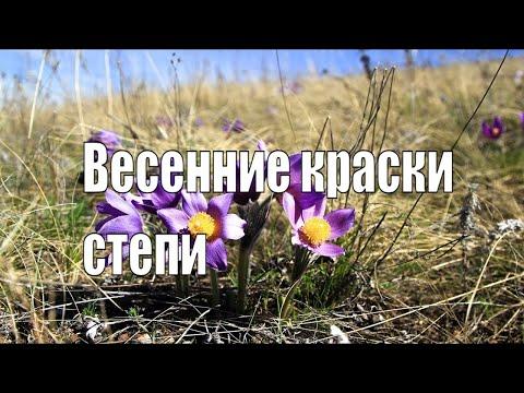 Весна в степи.