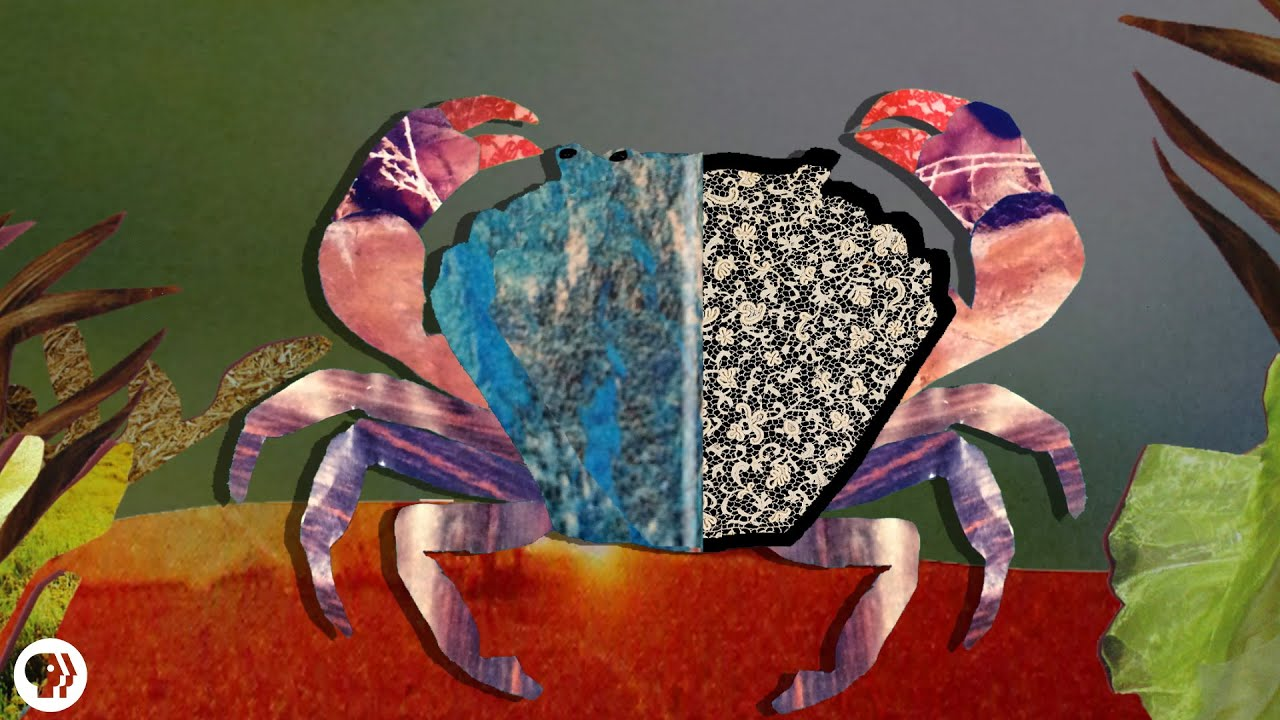 Brehm: Az állatok világa / HARMADIK ALREND: Gyökérfejű rákok (Rhizocephala), Rák parazita sacculina