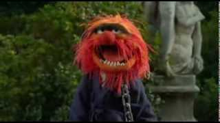 "Animal Rejoins The Muppets at Anger Managment: ""In Control ..."""