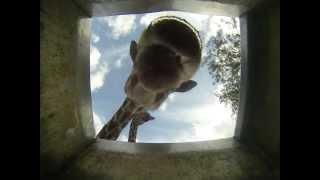How Do Animals Drink - at Safari Ramat Gan