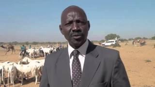 Niger : Des milliers d'éleveurs assistés à Diffa