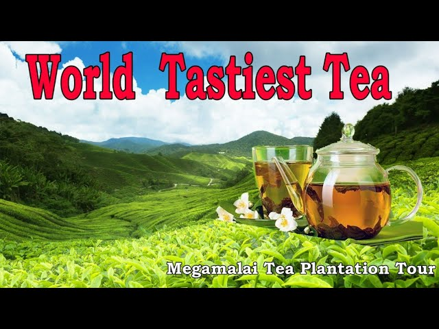 Megamalai - Theni Tea Plantation Tour