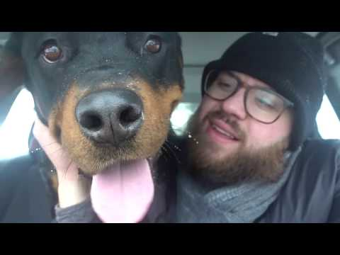 Rottweiler DESTROYS house from boredom |68