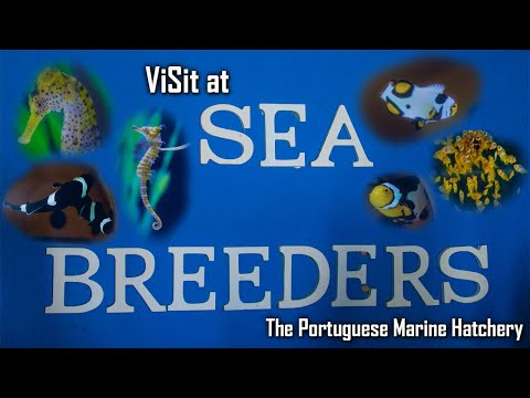 Sea Breeders - Marine Hatchery Portugal