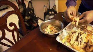 Husky And German Shepherd Having Whole Chicken For Thanksgiving!