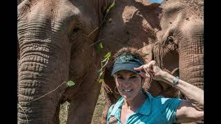 Elephants Laos 2019