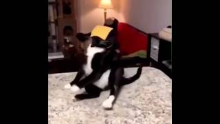 Cats vs Cheese