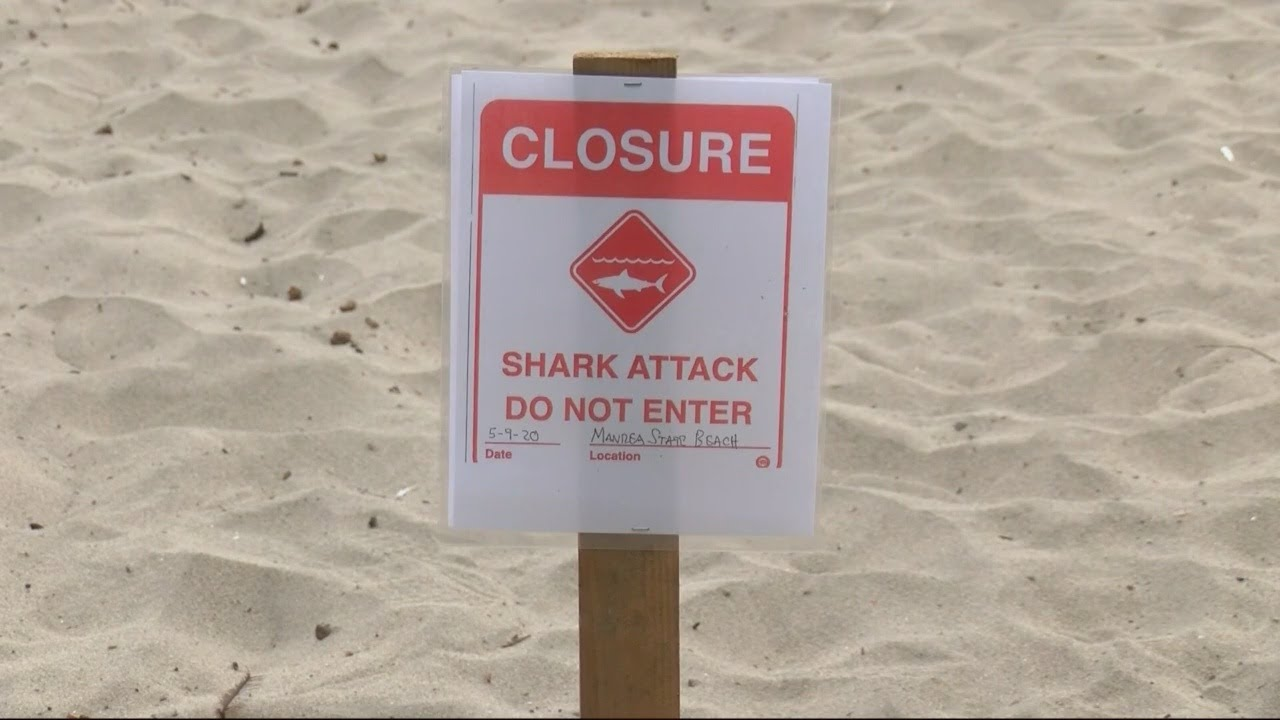 Santa Cruz surfer killed in shark attack identified