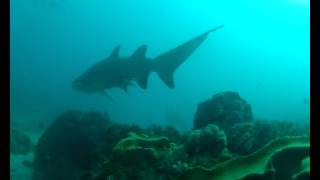 Scuba Byron Bay Grey Nurse Sharks 2012