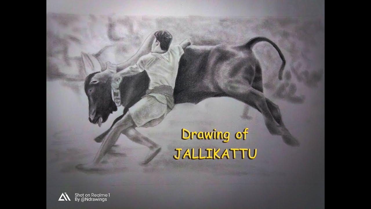 Drawings of jallikattu black pencil ndrawings