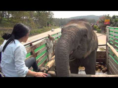 Lucky the Blind Circus Elephant Rescue