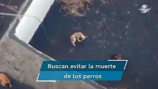 Las mascotas se encuentran en un estanque recibiendo comida y agua todos los días mediante los aparatos tecnológicos