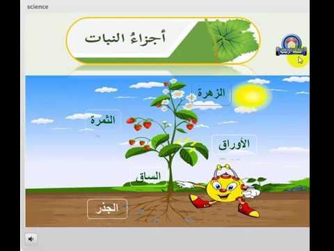 اجزاء النباتات ووظائفها Youtube
