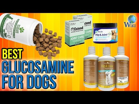 9 Best Glucosamine For Dogs 2017
