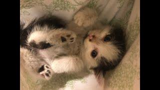 2019年10月12日の台風19号。 台風一過の荒川で子猫を拾いました。 BGM:神隠しの真相 https://dova-s.jp/bgm/play7692.html.