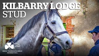 ITM Irish Stallion Showcase 2021 - Kilbarry Lodge Stud