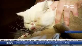 «Концлагерь для кошек»: вызволено 31 животное