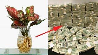 Lý Do Người Giàu Đặt Cây Này Lên Bàn Thờ Tiền Của Phất Lên ẦM ẦM😱😱💲💲💲