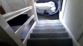 Белая собака!
