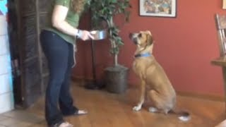 Impulse Control - Teaching The Dog Calm And Polite Manners