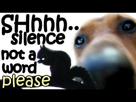 Big Dog Stalking Stalk Gray Ground Squirrel Wild Animals - Hunting Dogs Breeds - Funny Video Jazevox