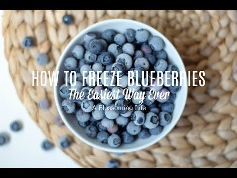How To Freeze Blueberries The Easiest Way Every
